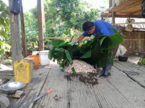 Fermenting-in-Banana-Leaves-2