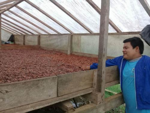 Drying Cacao 2